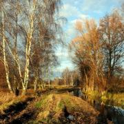 Moorgraben im Luch (Foto: Hajo Eckert)