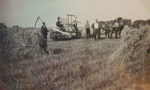Feldarbeit auf dem damaligen Zunk-Acker, heute Remontehof (Foto: privat)